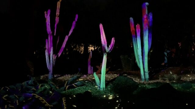 Desert Botanic Garden in Phoenix, Arizona – ELECTRIC DESERT