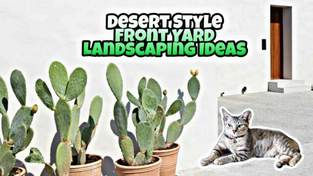 Desert Style Front Yard Landscaping Ideas
