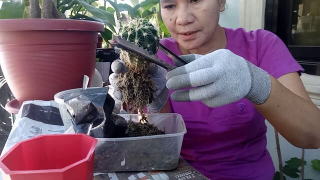 HOW TO REPOT YOUR CACTUS | Adelina G. Losegro