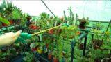 Watering Succulent Plants in Winter