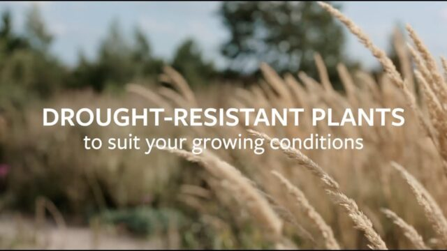 Drought-resistant plants to suit your growing conditions