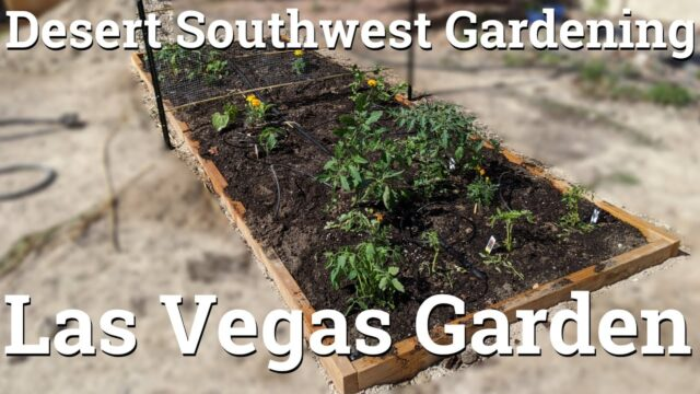Desert Southwest Garden – In Ground Gardening in Las Vegas