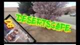 Desert Landscape Clean-up | Decomposed Granite