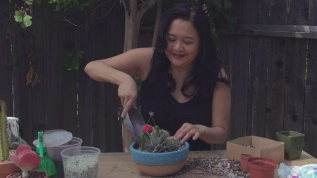 How To Make A Mixed Succulent and Cacti Container Garden