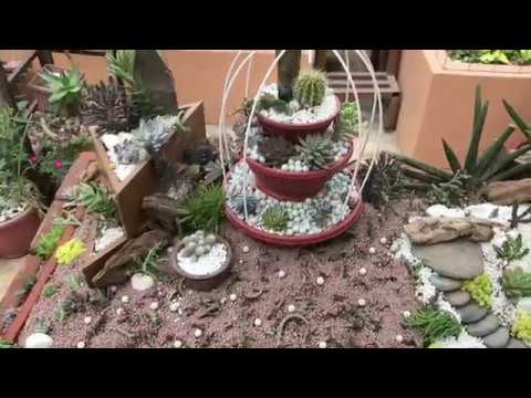 Table Top Succulent Landscaping