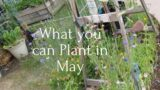 What you can Plant in May Zone 9b Desert Garden