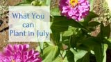 What you can plant in July Desert Garden Zone 9b
