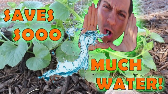 Better than Drip Irrigation? | Most Efficient Garden Irrigation System | Save up to 90% More Water