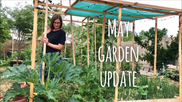 May Garden Update 2020 Phoenix, AZ