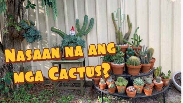 New Cactus Corner!