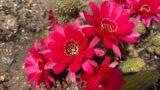 My Desert Plant's