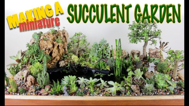 Making a miniature garden waterfall with pond, succulent cactus plants, succulent garden arrangement