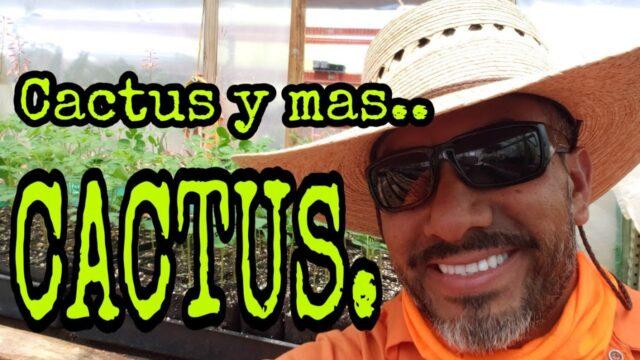 CACTUS Y MAS CACTUS pa mis YARDEROS