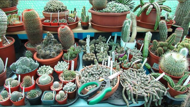 Cactus & Succulent Spring jobs to do after the Winter