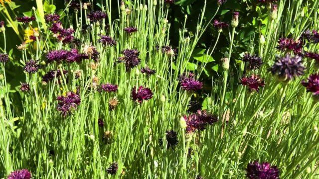 Desert Botanical Garden Blooms – Spring 2020
