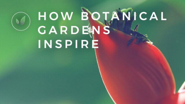How Botanical Gardens Lead to Innovations