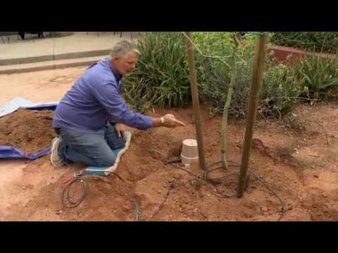 Grow Strong & Healthy Trees in the Desert