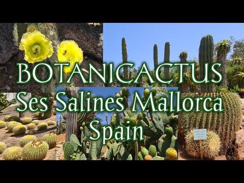 #5  #Botanischer Garten |#Botanic garden  BOTANICACTUS SES SALINES MALLORCA SPAIN