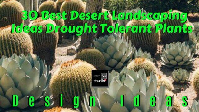 30 Best Desert Landscaping Ideas – Drought Tolerant Plants