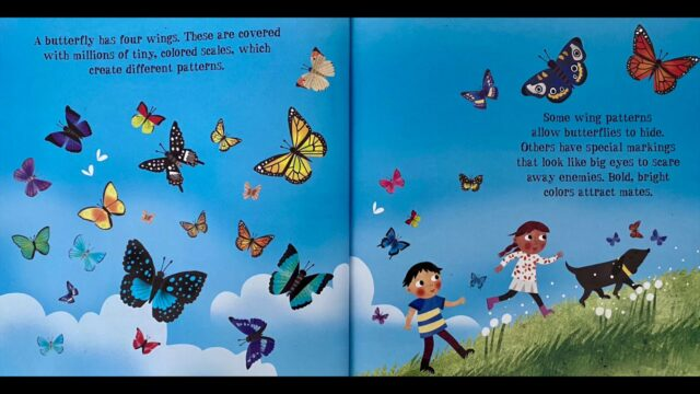 It's time for an amazing story!  The Amazing Lifecycle of a Butterfly!