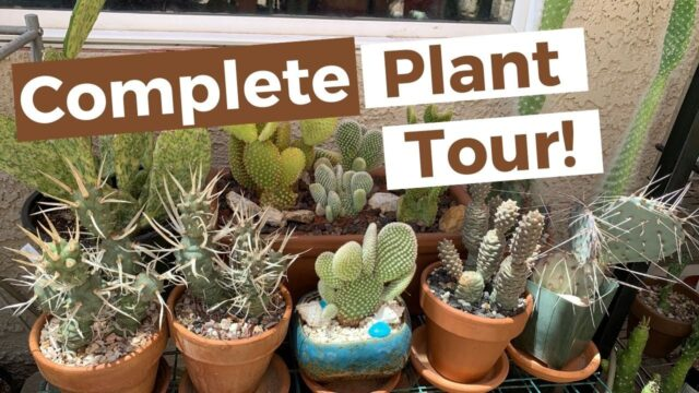 Complete Collection Plant Tour pt.1  (Spring/Summer) | Cactus, Succulents, Desert Plants
