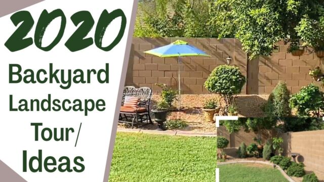 Arizona Backyard Landscape Ideas