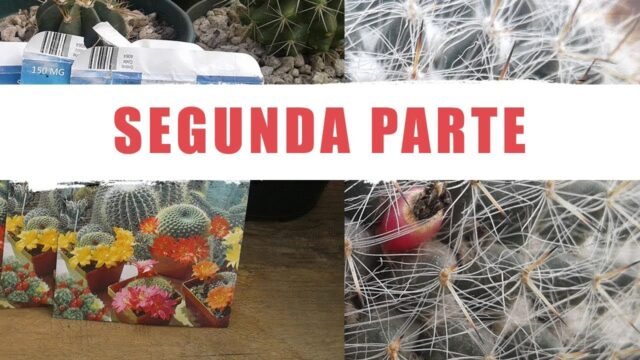 ¿Cómo germinar semillas de cactus? – (part 2) – by  Desert plants
