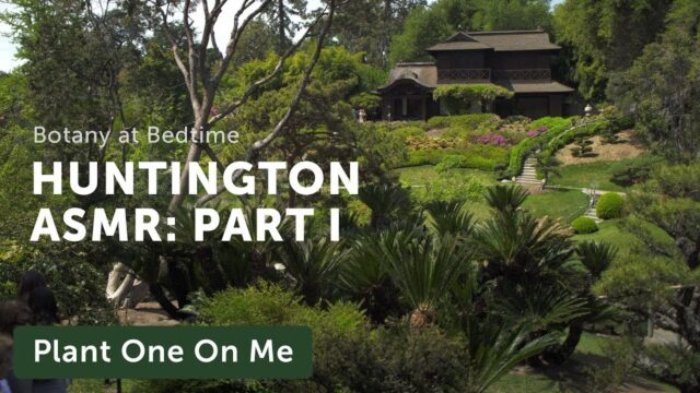 Botanical ASMR at The Huntington's Japanese Garden — Ep 174