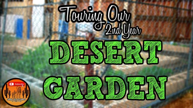 Desert Garden Tour| 2nd Year Garden| Growth Update|VLog #79