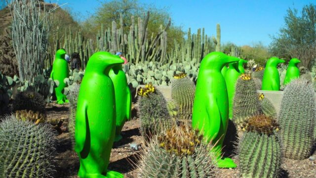 Spring Events at Desert Botanical Garden