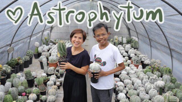 รู้จักสายพันธุ์ต่างๆของ Astrophytum ตอน 1/3 จัดเต็ม!ภาพชัด | Cactus Journey EP.96