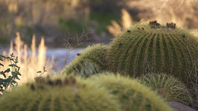Wallace Desert Garden