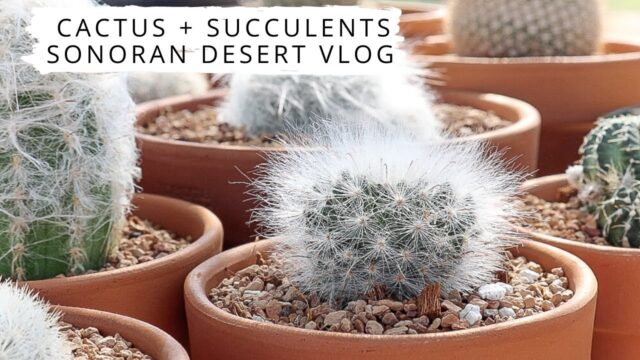Cactus + Succulents Vlog | Spend The Day With Me | Plant Therapy Thursday