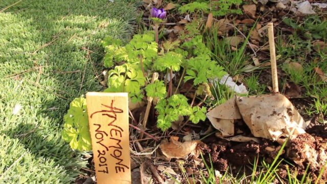 DIY Wood burned Plant Labels On Door Shims or Paint Sticks ~ Ep 99