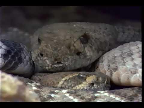 Sonoran Desert:  A Violent Eden – National Geographic VHS