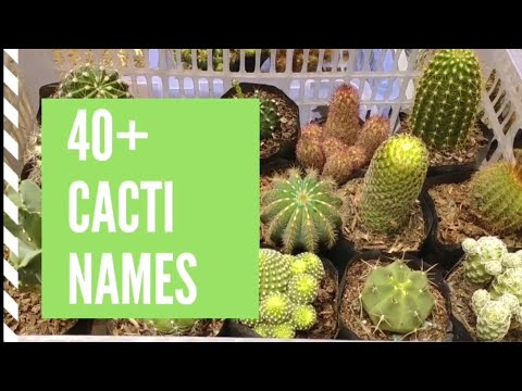 Cacti Names and Pictures- Cacti Types and  Identification