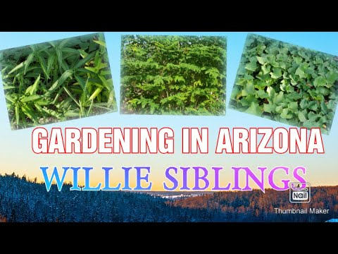DESERT GARDENING IN ARIZONA  #GardeningInTheDesert