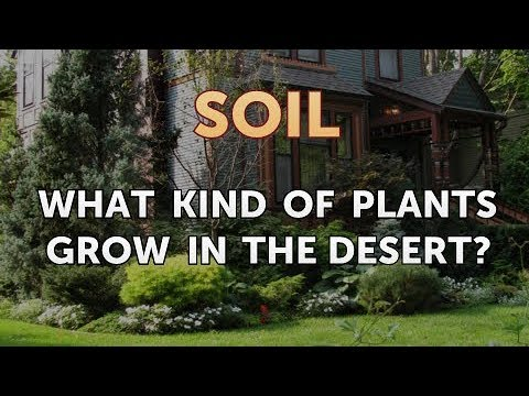 What Kind of Plants Grow in the Desert?