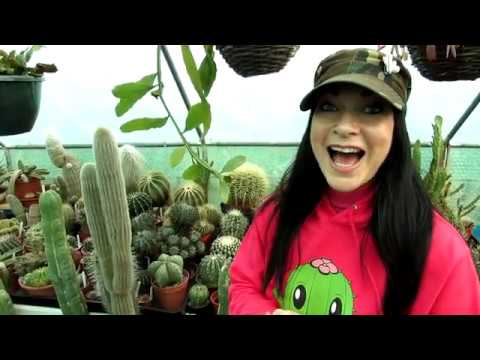 Our Echinocactus – Barrel Cactus Complete Collection Tour