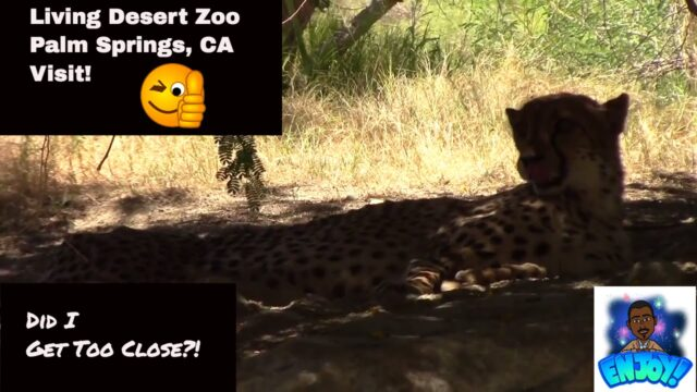 Living Desert Zoo in Palm Springs – Did I Get Too Close?!