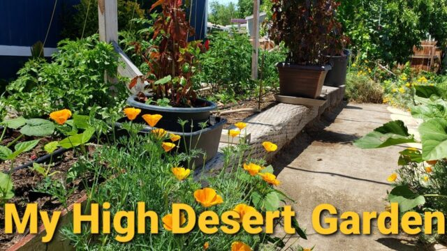 My High Desert Garden Tour Update