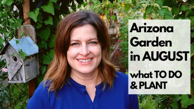 ARIZONA GARDEN in AUGUST: What TO DO & PLANT – plus tips for FALL GARDENING
