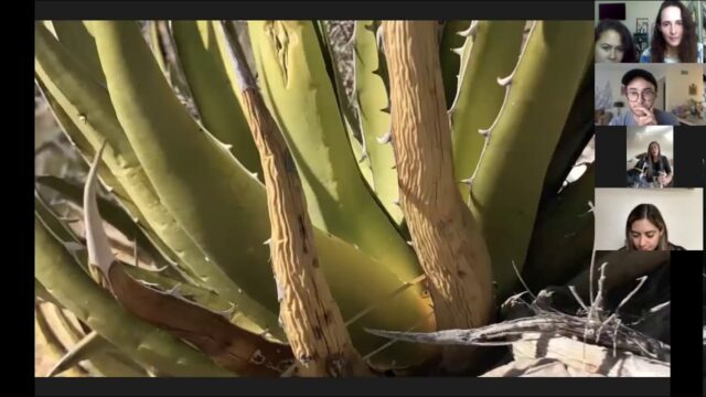 Desert Gardens – Andrew Torres