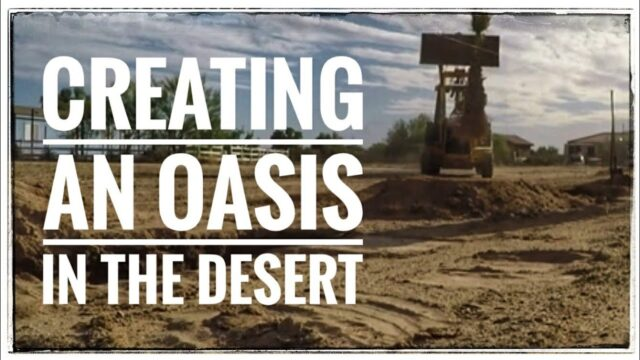 Creating an Oasis in the Desert on our Arizona Homestead