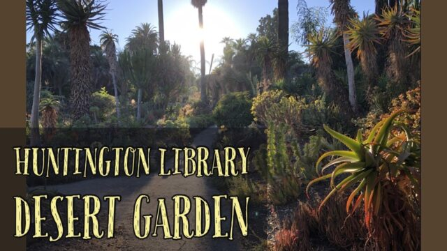Desert Gardens at The Huntington Library in August 2020