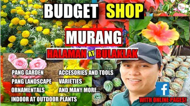 Murang HALAMAN at PANG GARDEN, LANDSCAPE sa GUIGUINTO BULACAN Part 2 | BUDGET EDITION