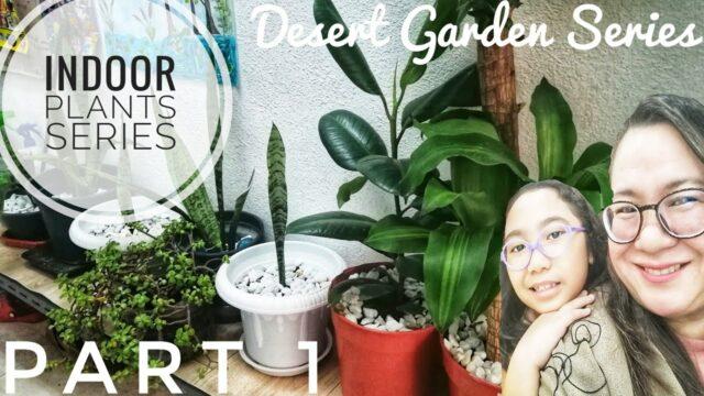 Desert Garden Series | Indoor Plants | Snake Plants