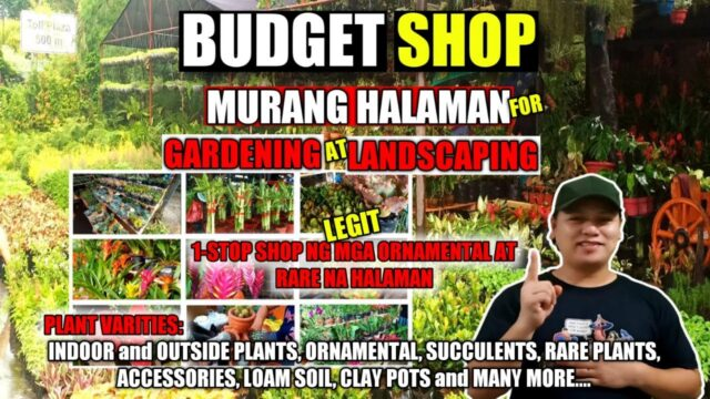 MURANG HALAMAN for GARDENING at LANDSCAPING | 1-STOP SHOP | TWISTED FERN GARDEN and LANDSCAPING
