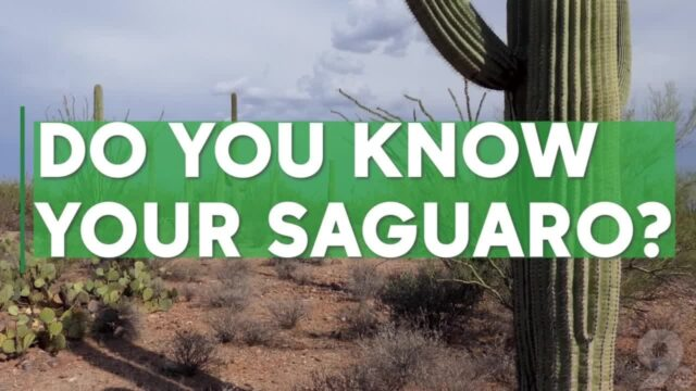 Do you know your saguaro? 5 quick facts about the desert plant