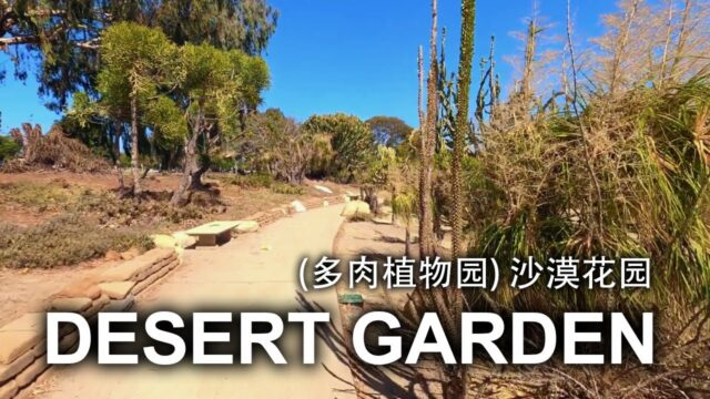 【HD 4K】HIDDEN GEM: DESERT GARDEN IN BALBOA PARK SAN DIEGO, CALIFORNIA, USA | 圣地亚哥 沙漠花园